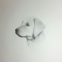Poppy-puppy-Graphite on paper